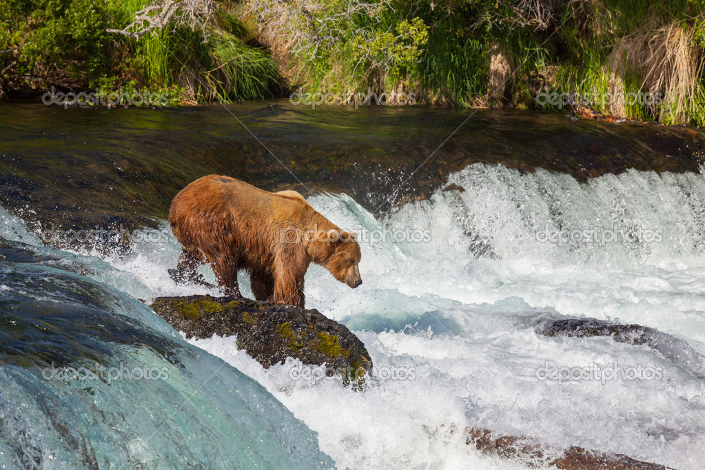 Brown bear on Alaska — Stock Photo #13452958
