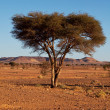 Tree in desert — Stock fotografie