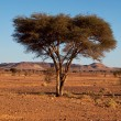 Tree in desert — Stockfoto