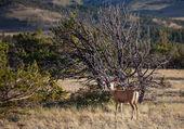 олень в природе — Стоковое фото