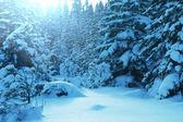 冷冻的树 — 图库照片