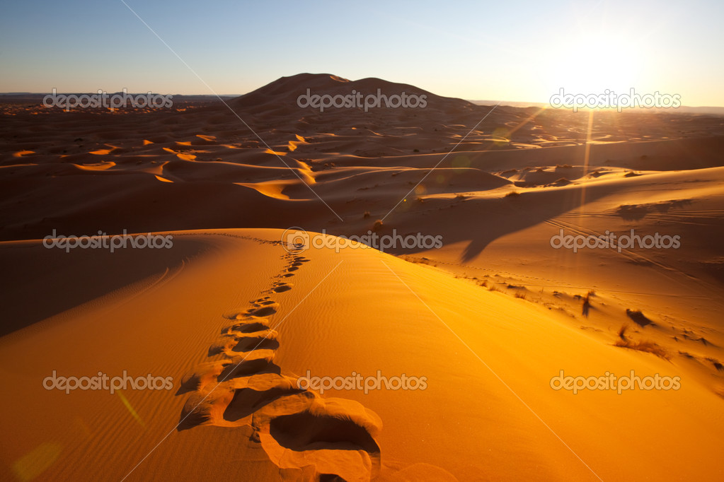 Sahara desert — Stock Photo #13509349
