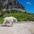 Stock Photo: Glacier Park