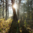 Sunny forest — Stock Photo #13747116