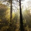 Sunny forest — Stock Photo #13747124