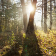 Sunny forest — Stock Photo #13747133