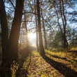 Stock Photo: Sunny forest