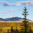 Alaskan landscapes — Stock Photo