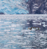 海のライオン — ストック写真