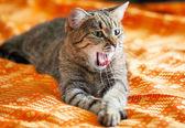リラックスした猫 — ストック写真