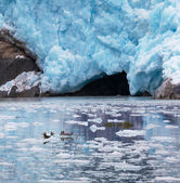 Glaciar no alasca — Foto Stock