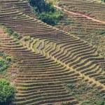 Fields in Vietnam — Stock Photo