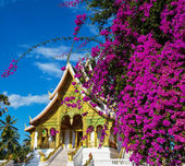 Temple in Luang Prabang — Stock Photo