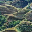 Stock Photo: Fields in Vietnam