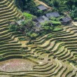 Fields in Vietnam — Stock Photo