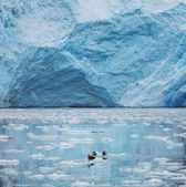 Alaska buzulda — Stok fotoğraf