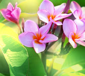 Hawaiian flowers — Stock Photo