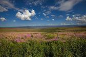 Tundra tarihinde alaska — Stok fotoğraf