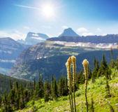 Glacier park — Stock Photo