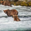 Bear on Alaska — Stock Photo #17631315