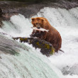 Bear on Alaska — Stock Photo #17687781