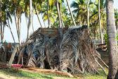 Cabana tropical — Foto Stock