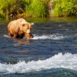 Bear on Alaska — Stock Photo #18107261