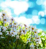 Spring flowers — Stock Photo