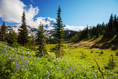 Mt.Rainier — Stock Photo