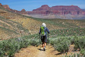 Hike in Grand Canyon — Stock Photo