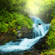 Creek in forest — Stock Photo #18831617