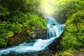 Creek in bos — Stockfoto