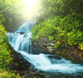 Creek in forest — Stock Photo