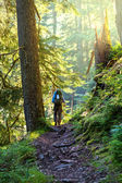 Hike in forest — Stock Photo