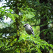 Wild Bird — Stock Photo