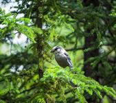 野生鸟 — 图库照片