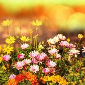Flores — Foto de Stock