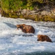 Bear on Alaska — Stock Photo #19180107