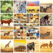 African safari - Stock Photo