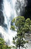 关于斯里兰卡瀑布 — 图库照片