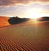 Desierto — Foto de Stock