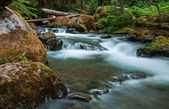 Arroyo en el bosque — Foto de Stock