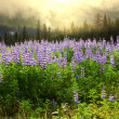 Stock Photo: Meadow on Alaska
