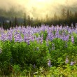 Foto de Stock  : Meadow on Alaska