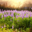 Meadow on Alaska — Stock Photo #19404825