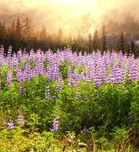 łąka na alasce — Zdjęcie stockowe