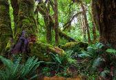 дождевой лес — Стоковое фото