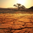 Stock Photo: Drought