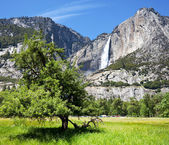 Spring in Yosemite — Stock Photo