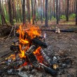 Fire in the forest — Stock Photo #20254441